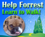 Help Forrest learn to walk
